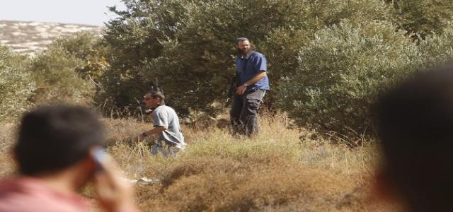 Israeli authorities deny Salfit farmers access to olive crops