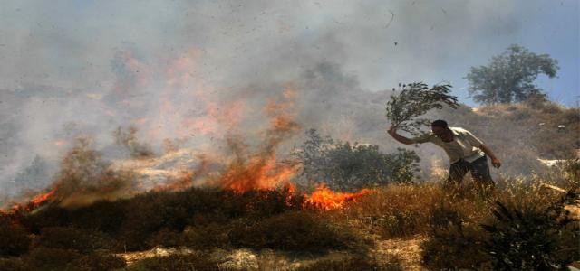 Jewish settlers torch Palestinian cultivated fields