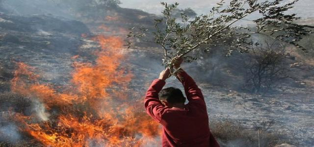 Jewish settlers burn 250 Palestinian trees in Nablus village