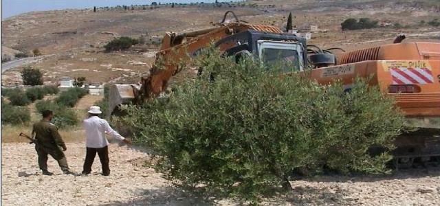 Israeli settlers set fire to more than 2,500 olive trees in Burin